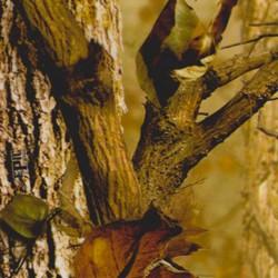 Folha Hidroimpresión Nature camo 50x100cm